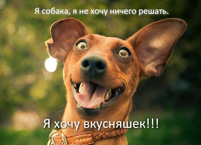 Собаки. Дрессировка в Волгограде. http://vk.com/dressirovka_volgograd dressirovka34@gmail.com +7 927 529 28 05